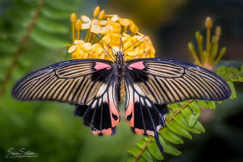 Tucson Botanical Garden 4-25-2018h-.jpg