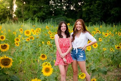 K&D Sunflower Shoot