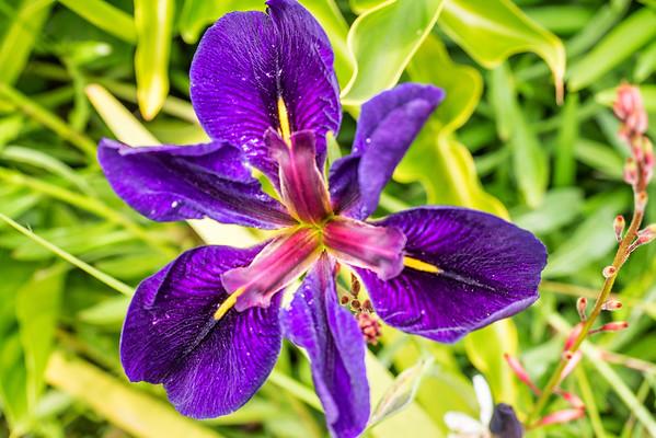 Backyard Flowers •Spring 2015