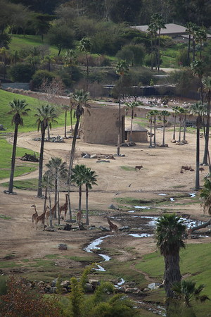 SD Wild Animal Park 2020-02-03