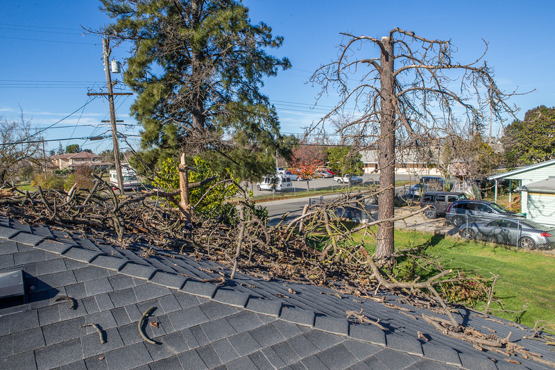 5671 Wallace Ave - Tree 1030am 12 16 2017 Extremly Windy Conditions-82.jpg