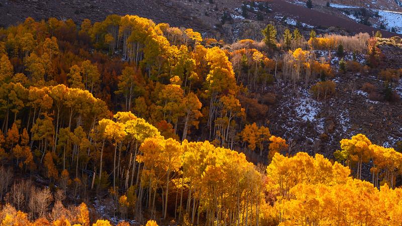 Eastern-Sierras-Bishop-Creek-Fall-Colors-03.jpg