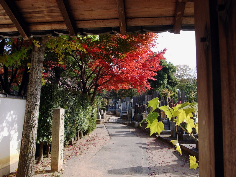 Saiun-in Foliage