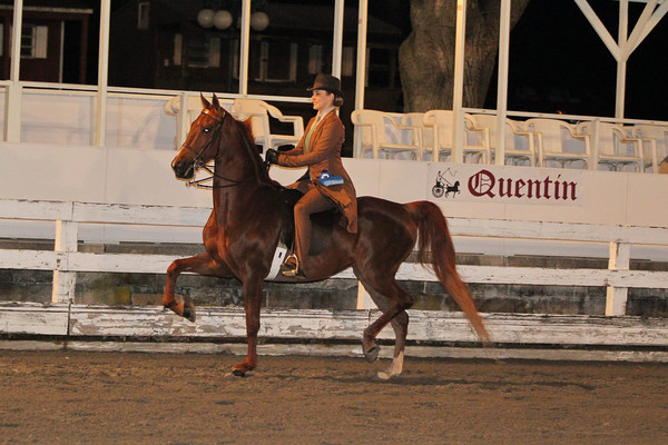 066A Open Adult Equitation