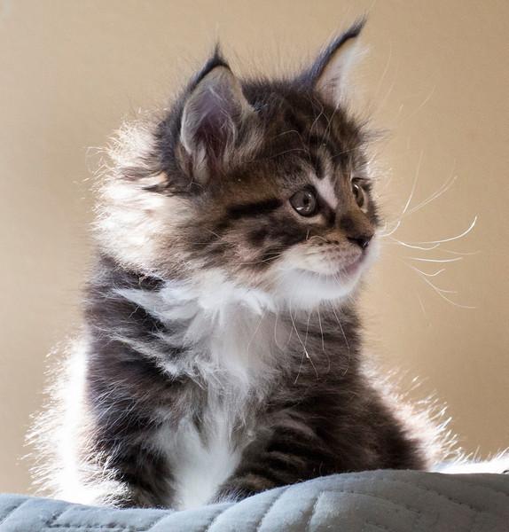 Kittens225.jpg