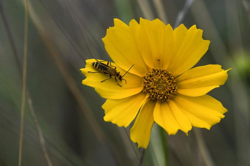 yellow flower&bug.jpg