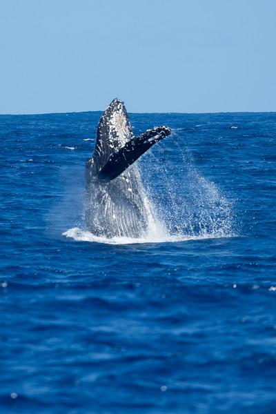 whales-leila-67.jpg