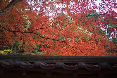 Nov 2014.. Japan Visit