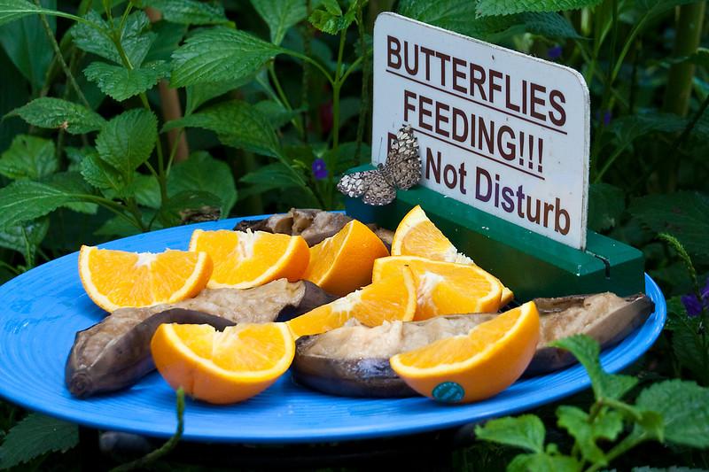 Feeding Butterflies