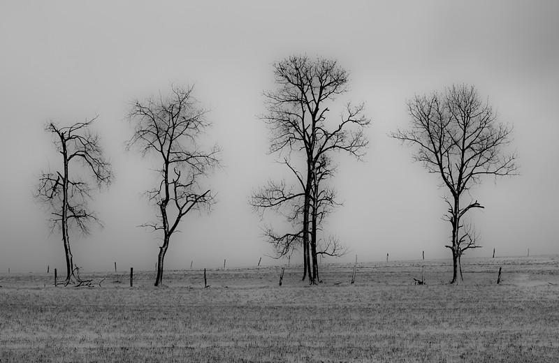 winter trees-1-2.jpg