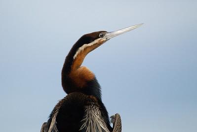 Africa Birds