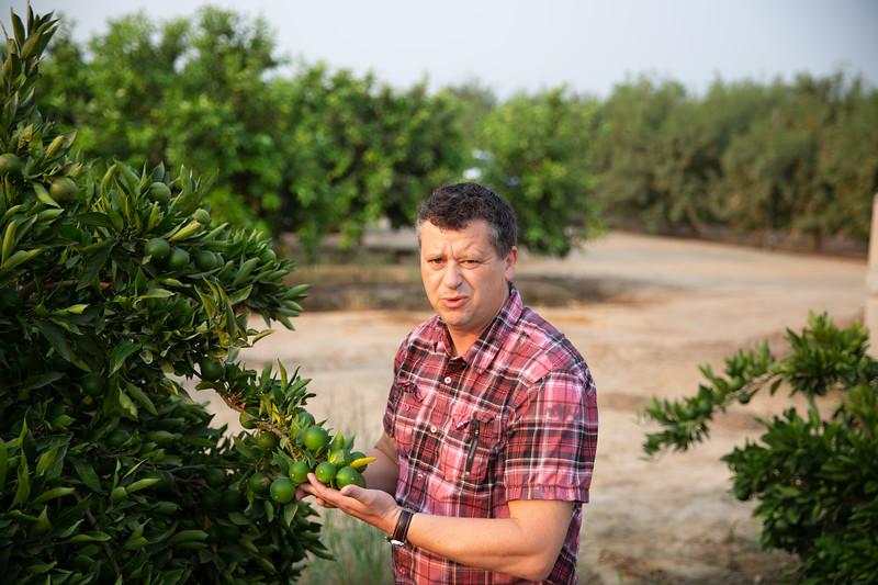 Inspecting mandarin set