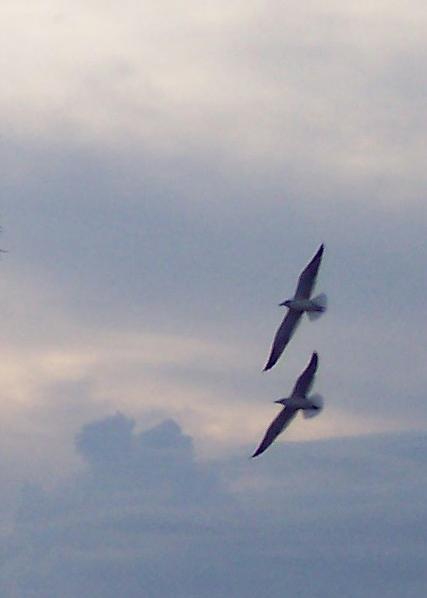 two seagulls.jpg