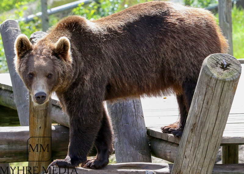 Bjørneparken2017-43.jpg