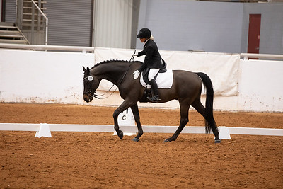 Horse 159