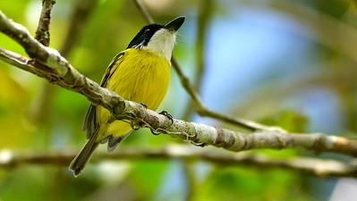 CRH Holiday Costa Rica: Rancho Naturalista Highlights=