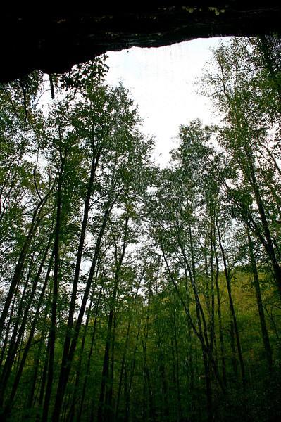 Pisgah Forest 9-30-12 76.jpg