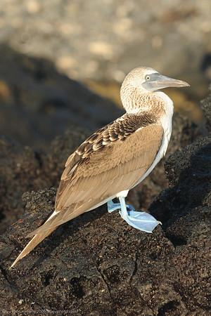 Galapagos Islands/ Ecuador (Jun 09)