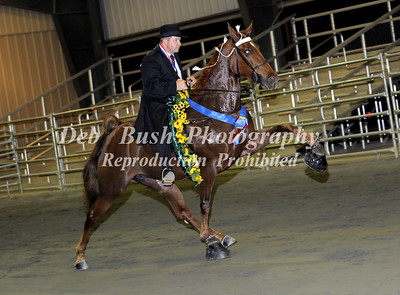 SOUTHERN CHAMPIONSHIP CHARITY HORSE SHOW- FRANKLIN GA -APRIL 5-6