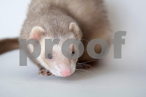 2017 October Small Animal Gallery