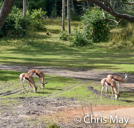 Animal Kingdom 18-76.jpg