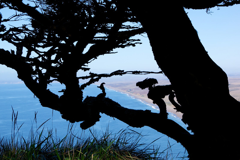 View of Point Reyes Shoreline from behind a tree