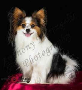 Portraits/Pets