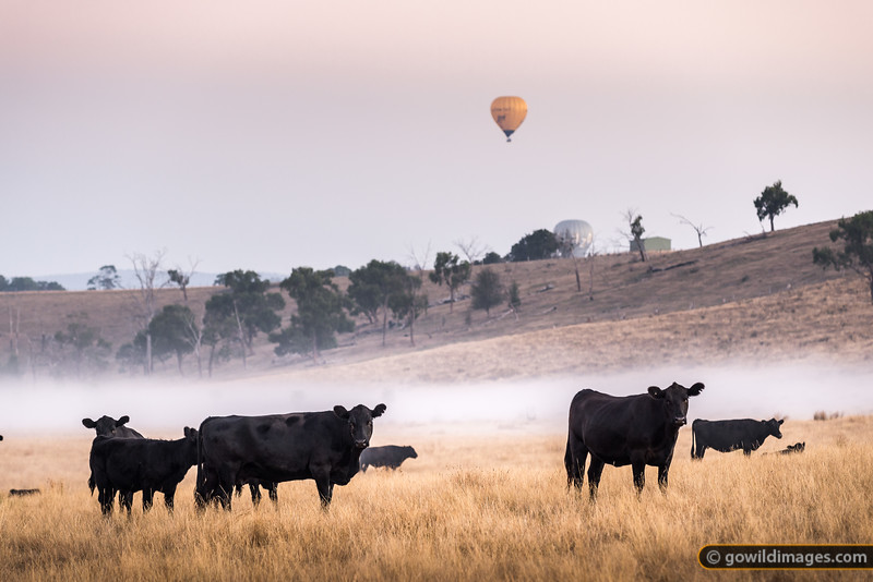 Balloons and Beef
