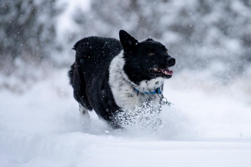 First Snow Powell Butte 2019