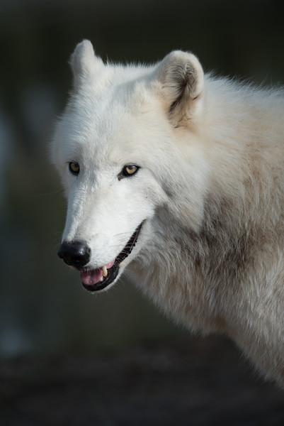 Seacrest Wolves_-49.jpg