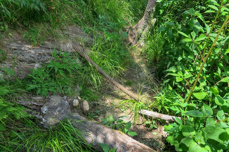Greasy Cove Trail -- 5,550'