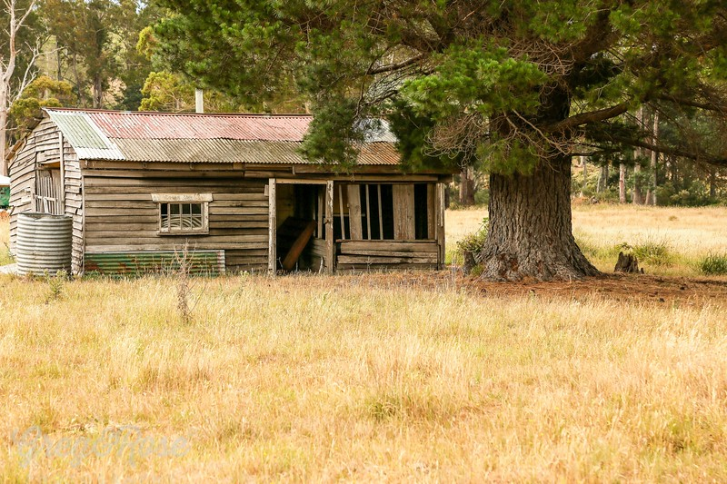 Character abandoned house under a tree in Sringfield , Tasmania