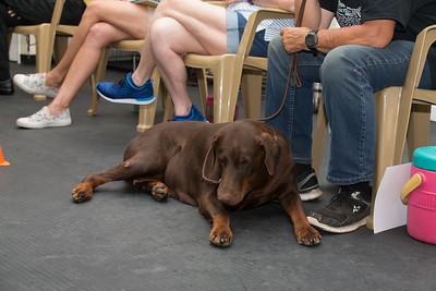 Canine star academy