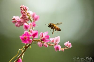 Honey Bees & Beekeeping