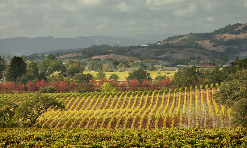 California vineyards 1