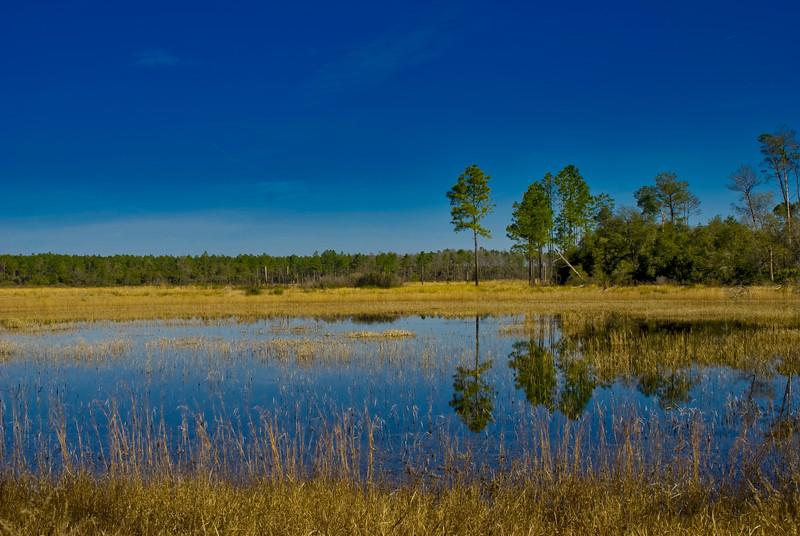 OCALA Hopkins Prairie pond.jpg