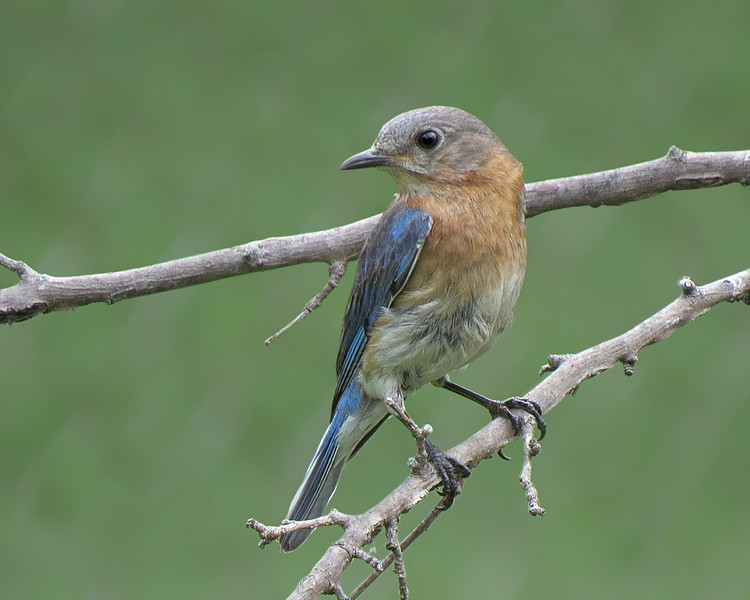 SX50_bluebird_faith_bit_116.jpg