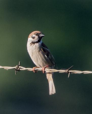 U.S. Bird Life List 2016