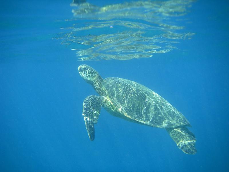 Turtle Town Snorkel 11182