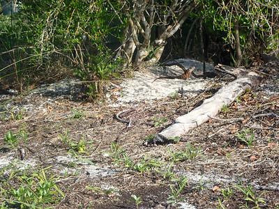 Life's a Beach Barrier Island Shelling - Heinitsh & Service