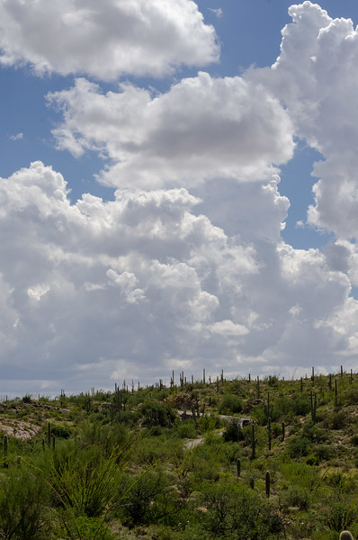 20180902-Saguaro-NP-East-4367.jpg
