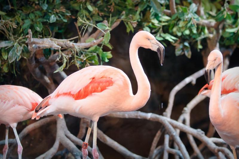 Monterey Bay Aquarium-2466.jpg