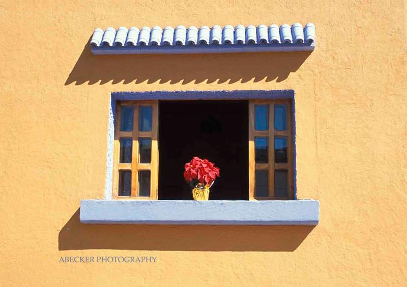 Flower in window.jpg