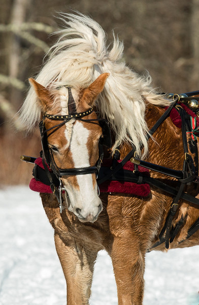 Loved the mane on this horse!  And, the wind did crazy things to it...