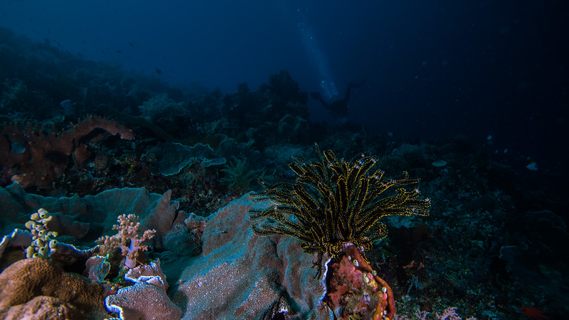 Taken from Jiko Malamo divesite in Ternate Island, North Maluku, Indonesia during our 8D7N excursion in March 2018