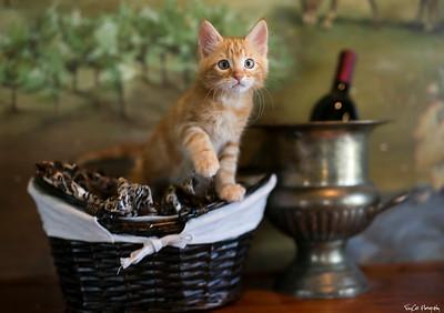 Wine and Kitties