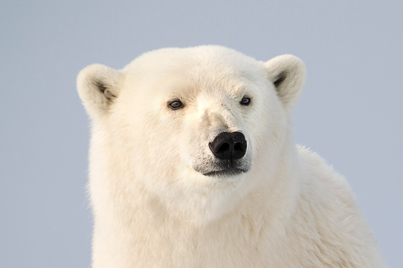 Portrait Polar.jpg