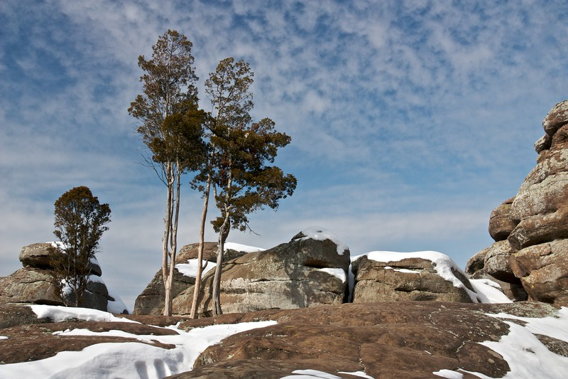 Juniper trees and sandstone outcrop. Garden of the Gods Wilderness, Illinois.