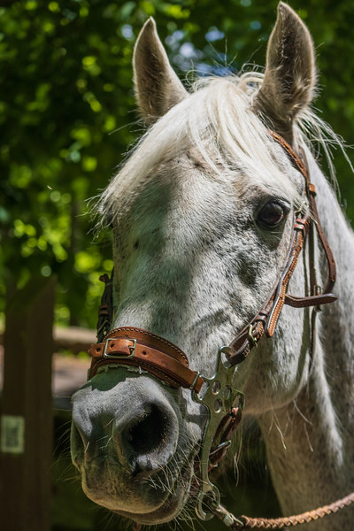 2021-Week 20 - On the Bridle Path at Tyler State Park.jpg