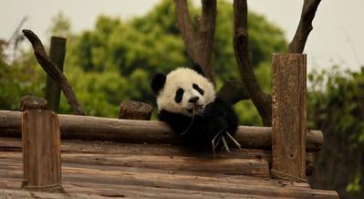 China 04/2010